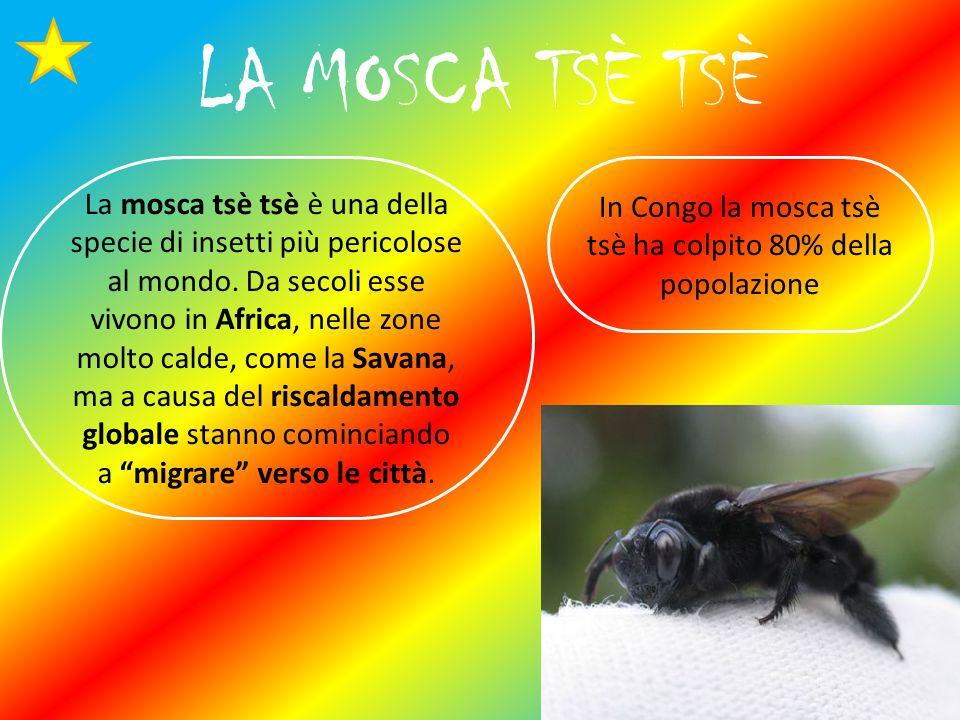 In Congo la mosca tsè tsè ha colpito 80% della popolazione