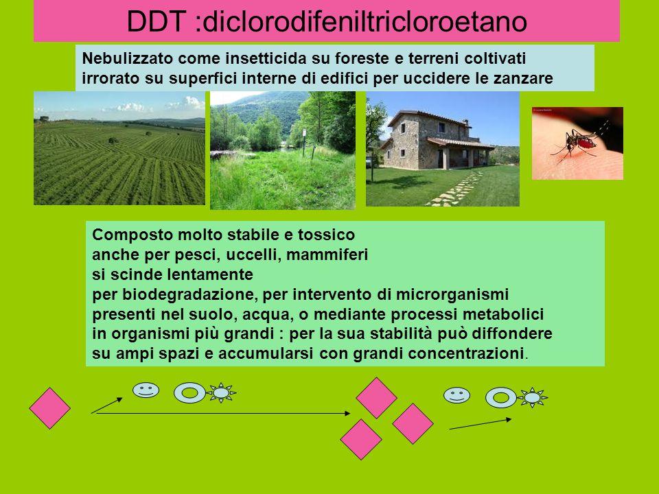 DDT :diclorodifeniltricloroetano