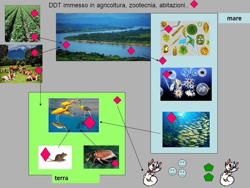 DDT immesso in agricoltura, zootecnia, abitazioni..