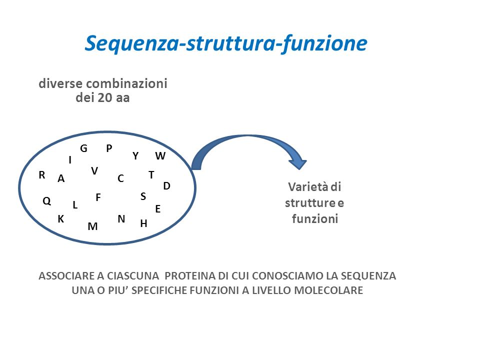 Sequenza-struttura-funzione
