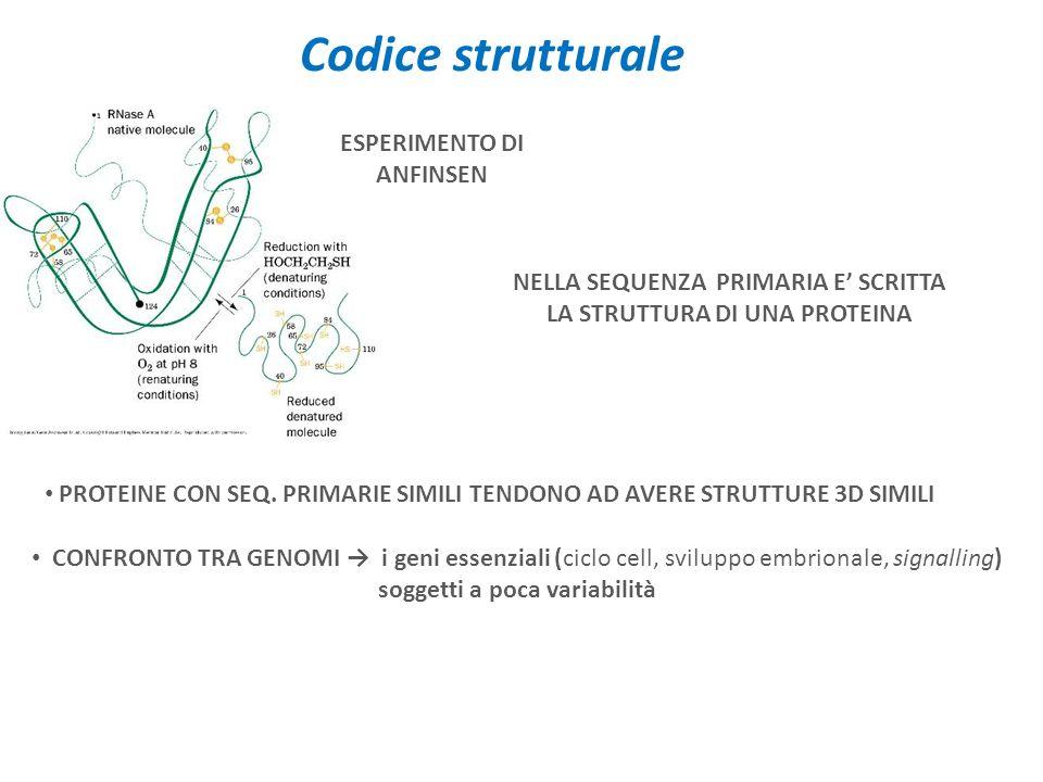 Codice strutturale ESPERIMENTO DI ANFINSEN