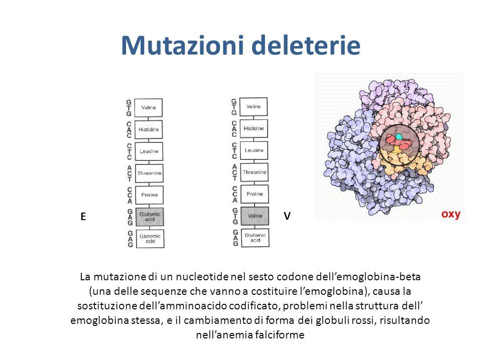 Mutazioni deleterie E V