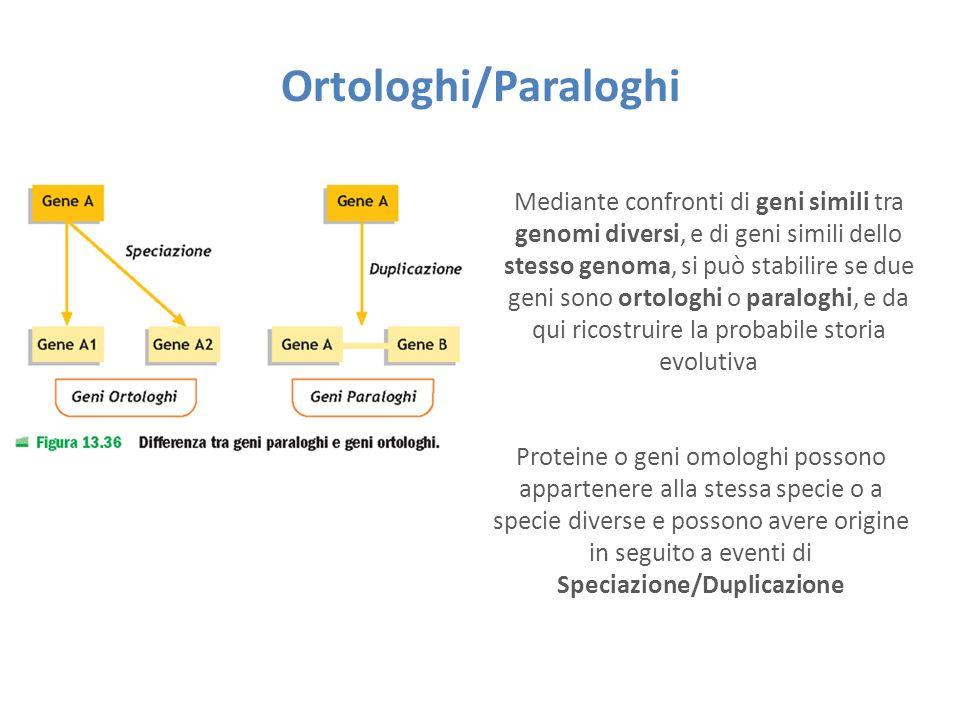 Ortologhi/Paraloghi