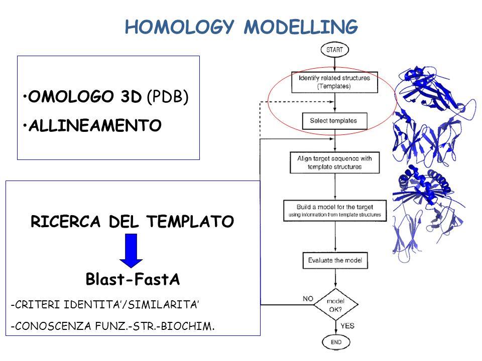 HOMOLOGY MODELLING OMOLOGO 3D (PDB) ALLINEAMENTO RICERCA DEL TEMPLATO