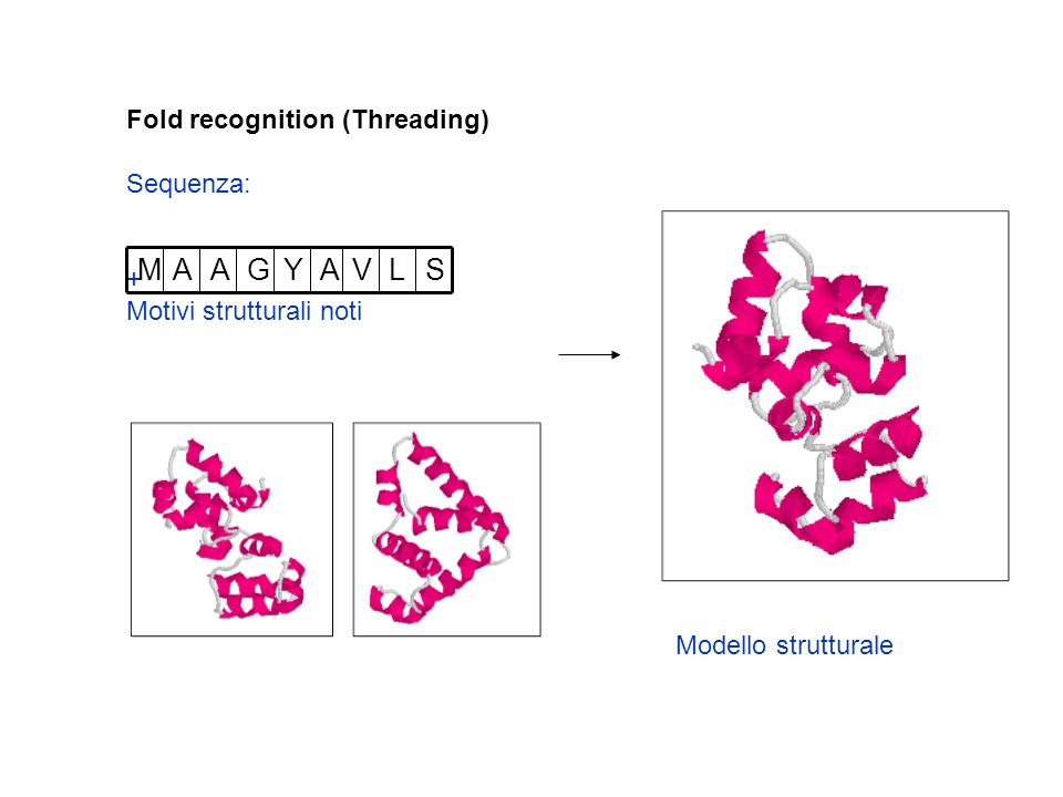 S L V A Y G M Fold recognition (Threading) Sequenza: +