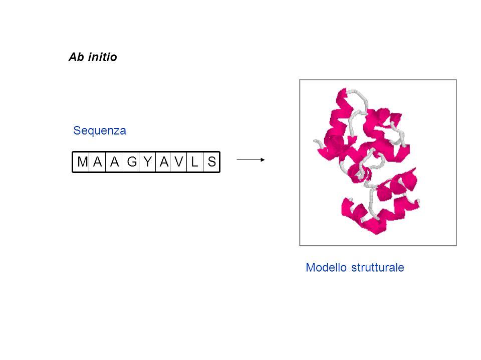 Ab initio Sequenza S L V A Y G M Modello strutturale 6