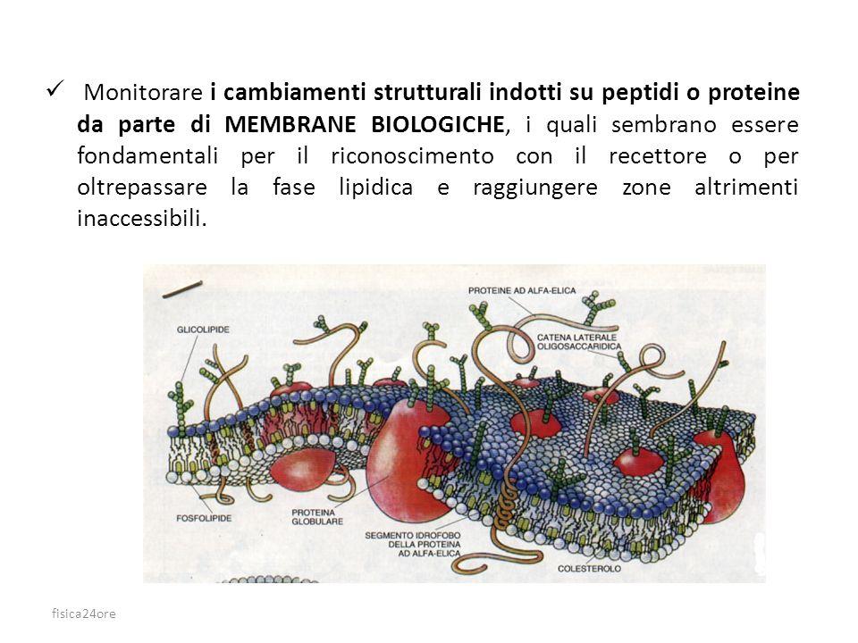 Monitorare i cambiamenti strutturali indotti su peptidi o proteine da parte di MEMBRANE BIOLOGICHE, i quali sembrano essere fondamentali per il riconoscimento con il recettore o per oltrepassare la fase lipidica e raggiungere zone altrimenti inaccessibili.
