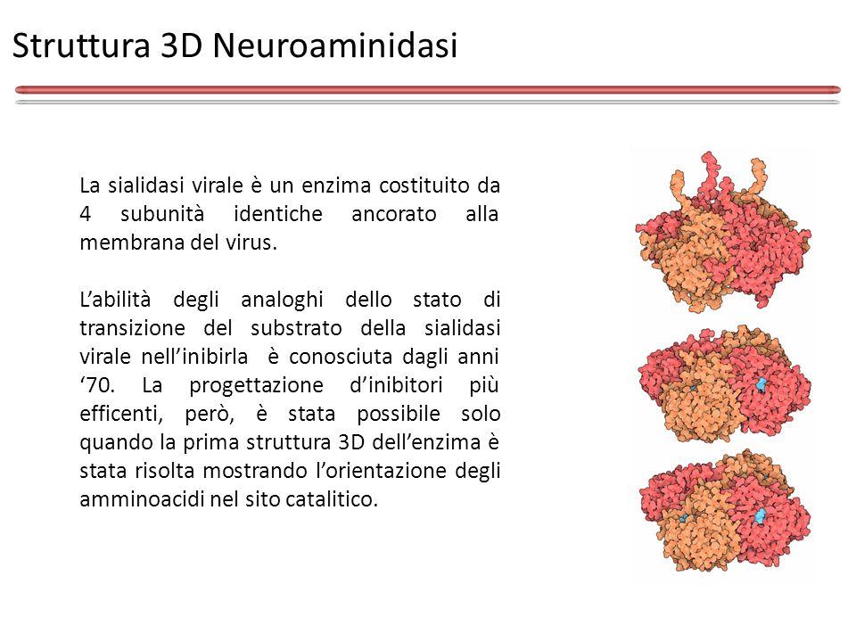 Struttura 3D Neuroaminidasi