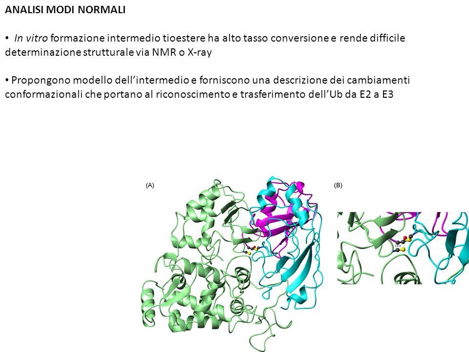 ANALISI MODI NORMALI In vitro formazione intermedio tioestere ha alto tasso conversione e rende difficile determinazione strutturale via NMR o X-ray.