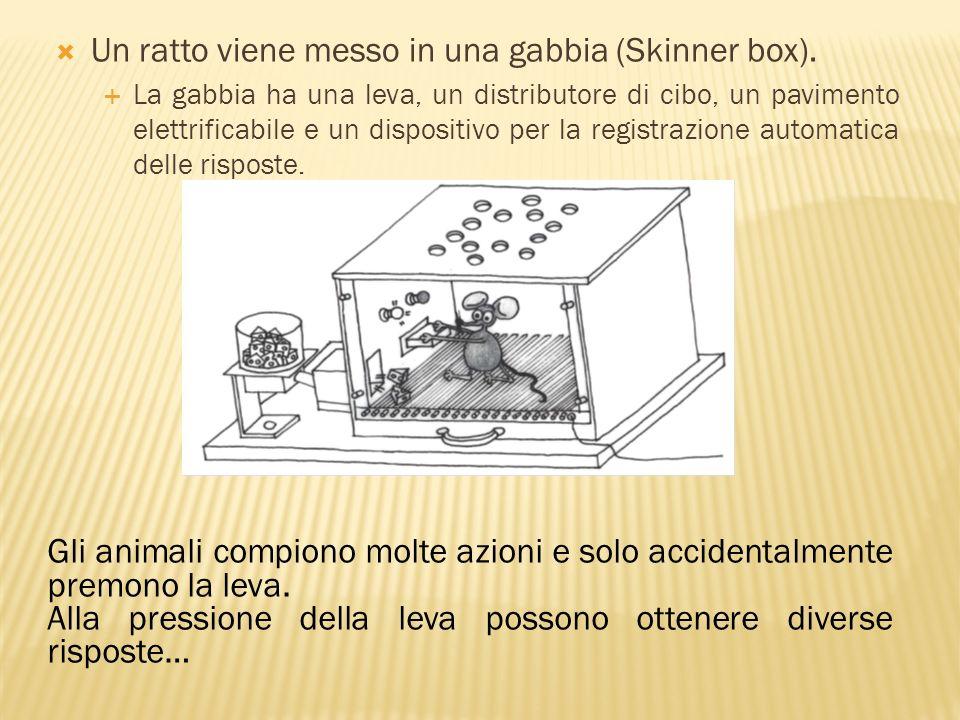 Un ratto viene messo in una gabbia (Skinner box).