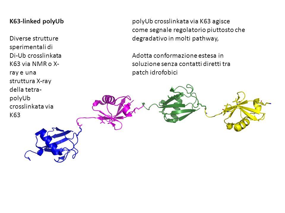 K63-linked polyUb