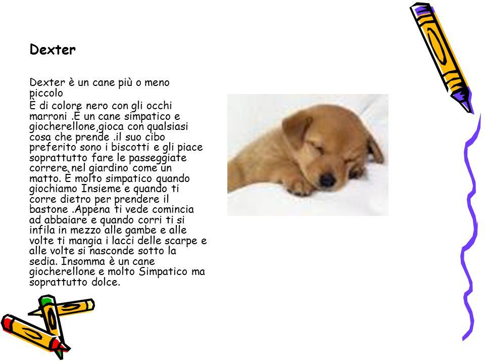 Dexter Dexter è un cane più o meno piccolo