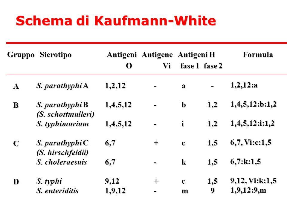 Schema di Kaufmann-White