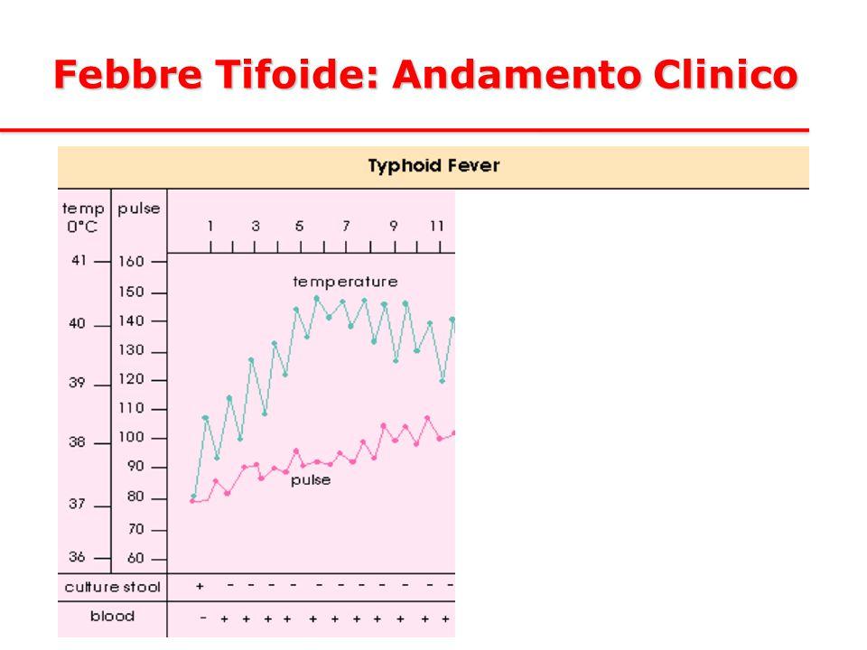 Febbre Tifoide: Andamento Clinico