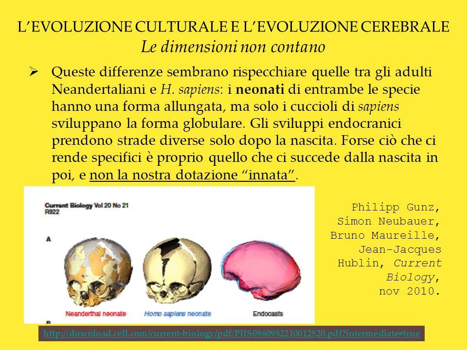L'EVOLUZIONE CULTURALE E L'EVOLUZIONE CEREBRALE Le dimensioni non contano