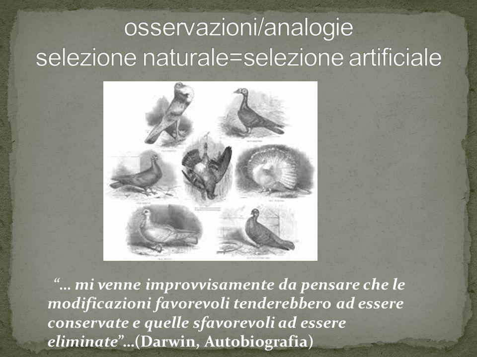 osservazioni/analogie selezione naturale=selezione artificiale