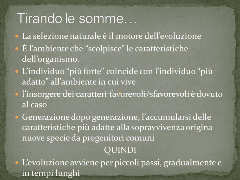 Tirando le somme… La selezione naturale è il motore dell'evoluzione