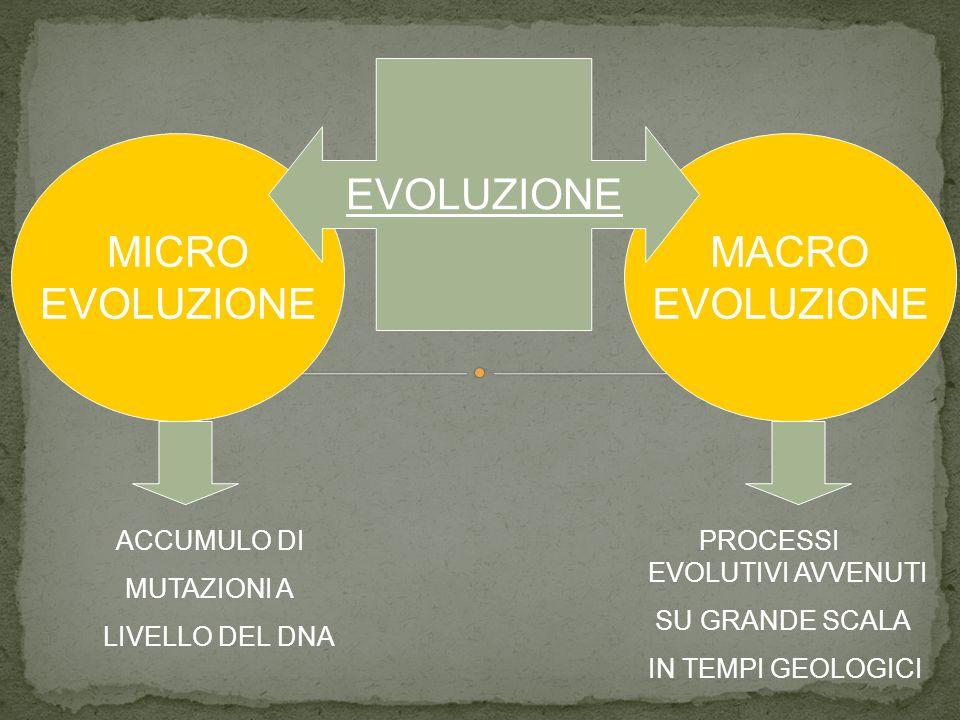 EVOLUZIONE MICRO EVOLUZIONE MACRO EVOLUZIONE ACCUMULO DI MUTAZIONI A