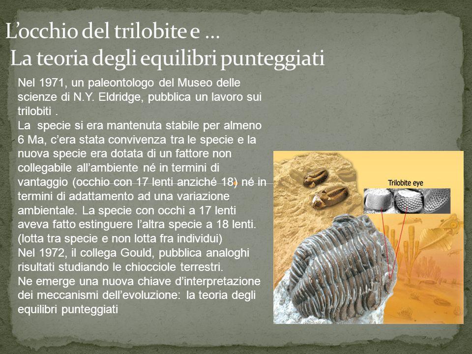 L'occhio del trilobite e … La teoria degli equilibri punteggiati
