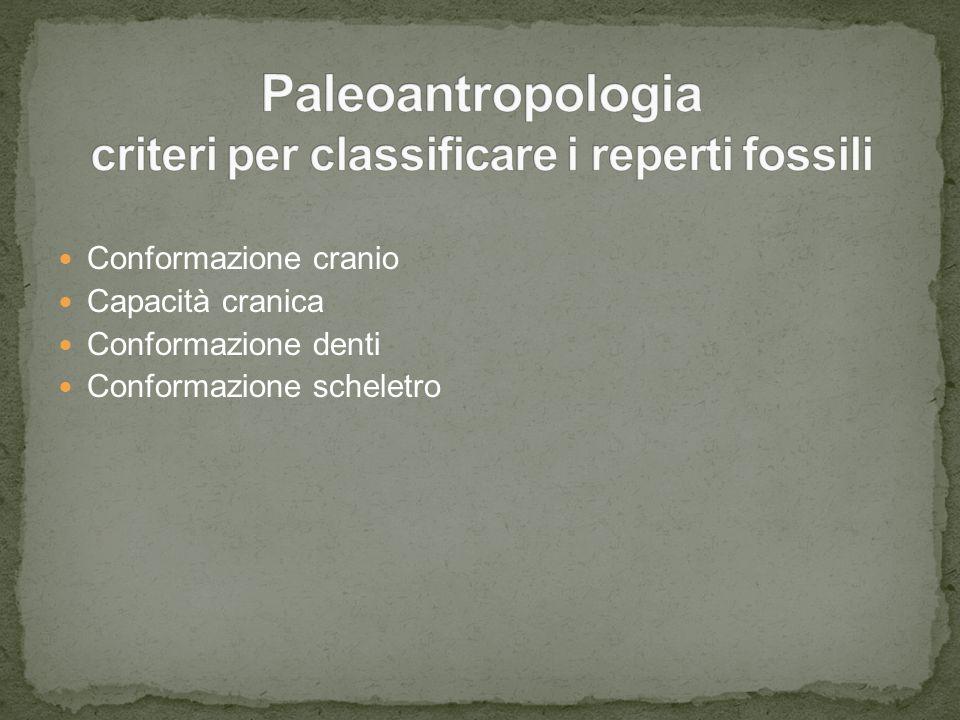 Paleoantropologia criteri per classificare i reperti fossili