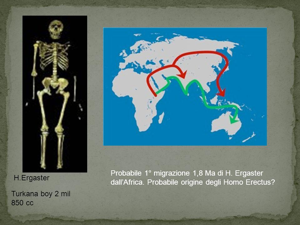 Probabile 1° migrazione 1,8 Ma di H. Ergaster dall'Africa