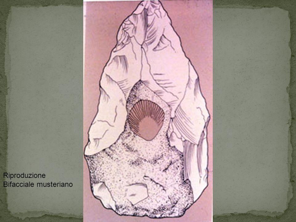 Riproduzione Bifacciale musteriano