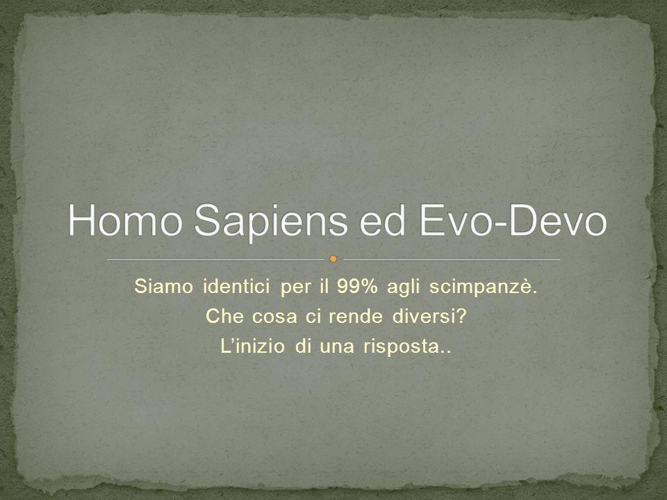 Homo Sapiens ed Evo-Devo