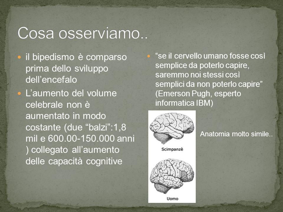 Cosa osserviamo.. il bipedismo è comparso prima dello sviluppo dell'encefalo.