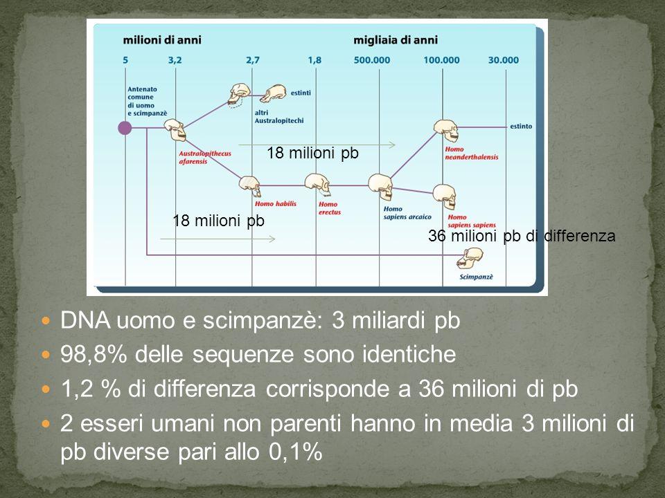 DNA uomo e scimpanzè: 3 miliardi pb