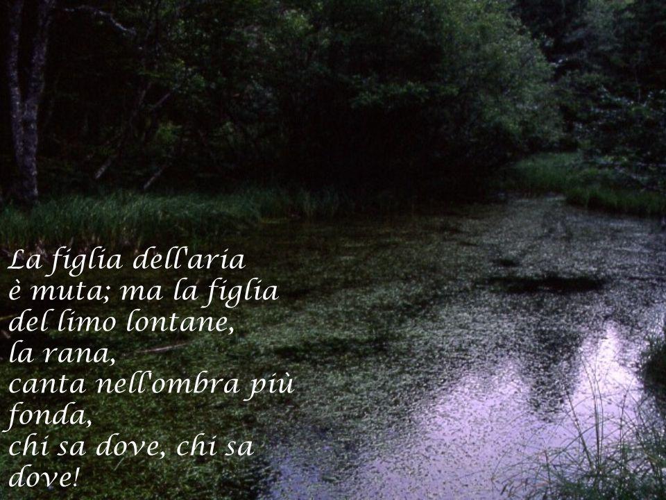 La figlia dell aria è muta; ma la figlia del limo lontane, la rana, canta nell ombra più fonda, chi sa dove, chi sa dove!