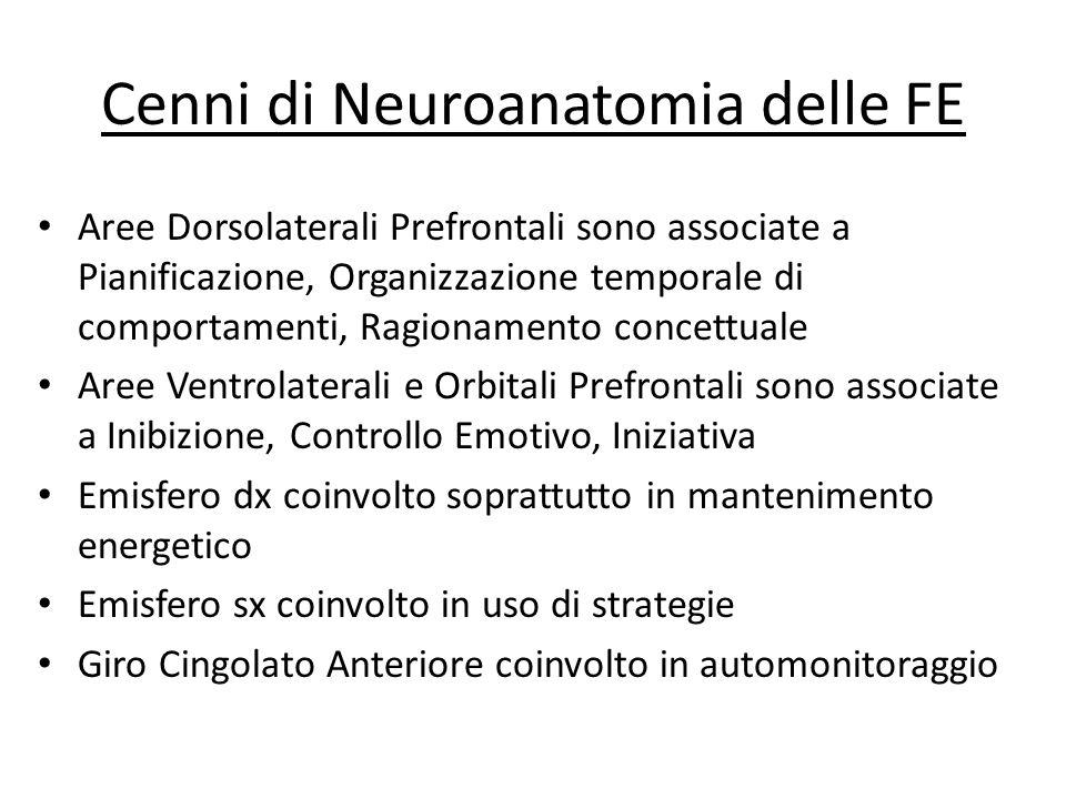Cenni di Neuroanatomia delle FE