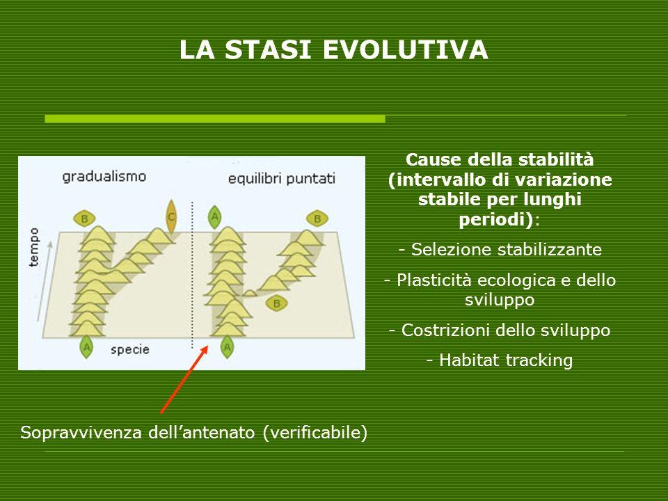 LA STASI EVOLUTIVA Cause della stabilità (intervallo di variazione stabile per lunghi periodi): Selezione stabilizzante.