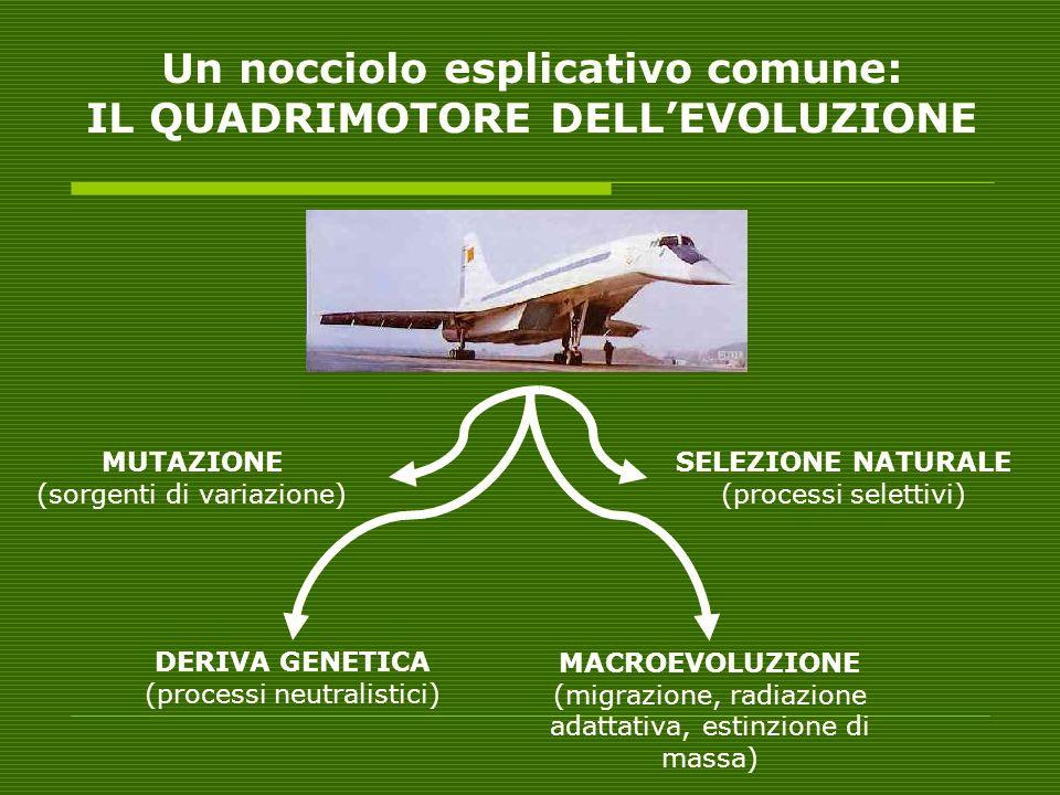 Un nocciolo esplicativo comune: IL QUADRIMOTORE DELL'EVOLUZIONE