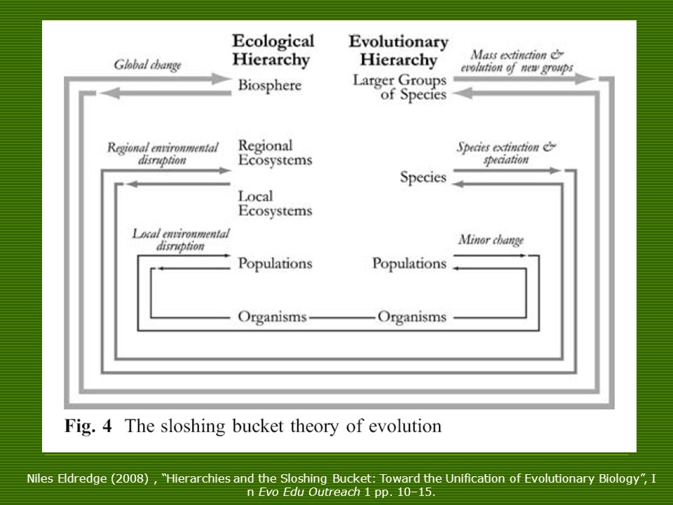Niles Eldredge (2008) , Hierarchies and the Sloshing Bucket: Toward the Unification of Evolutionary Biology , I