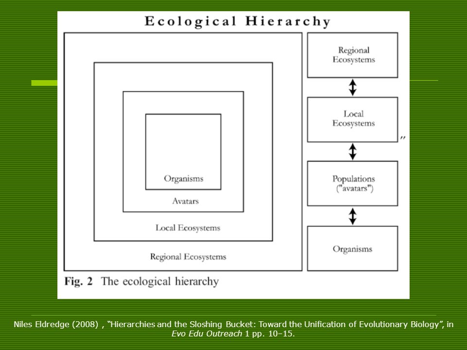 Niles Eldredge (2008) , Hierarchies and the Sloshing Bucket: Toward the Unification of Evolutionary Biology , in Evo Edu Outreach 1 pp. 10–15.