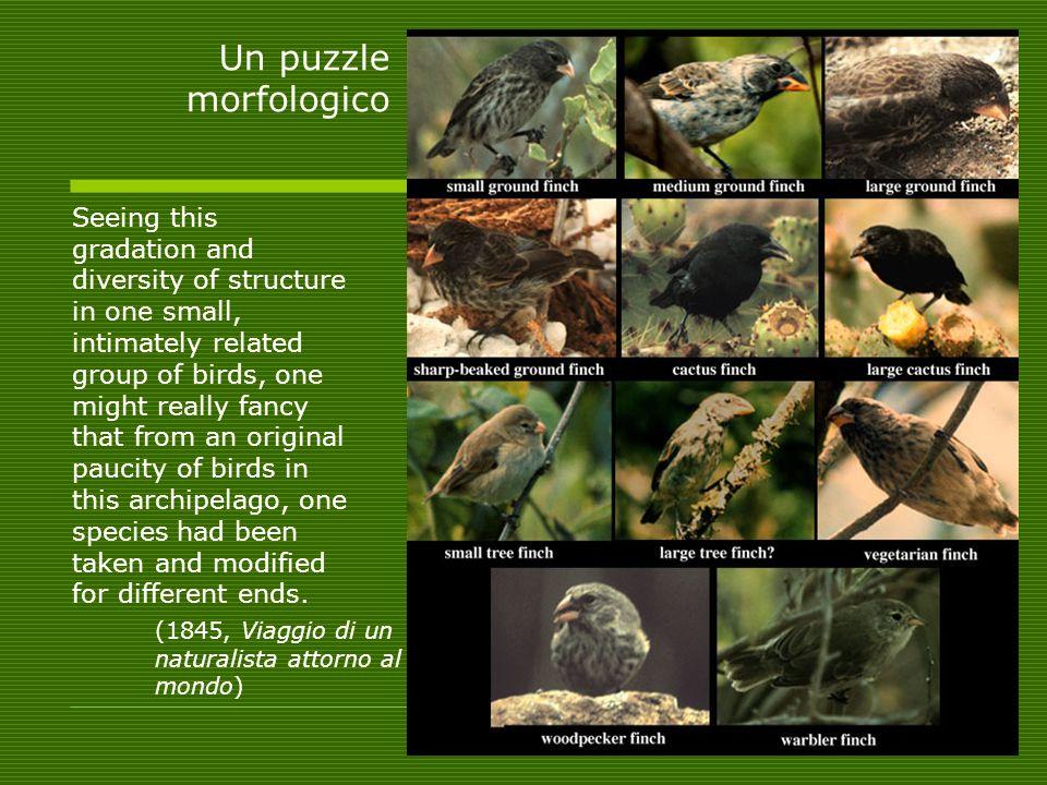 Un puzzle morfologico