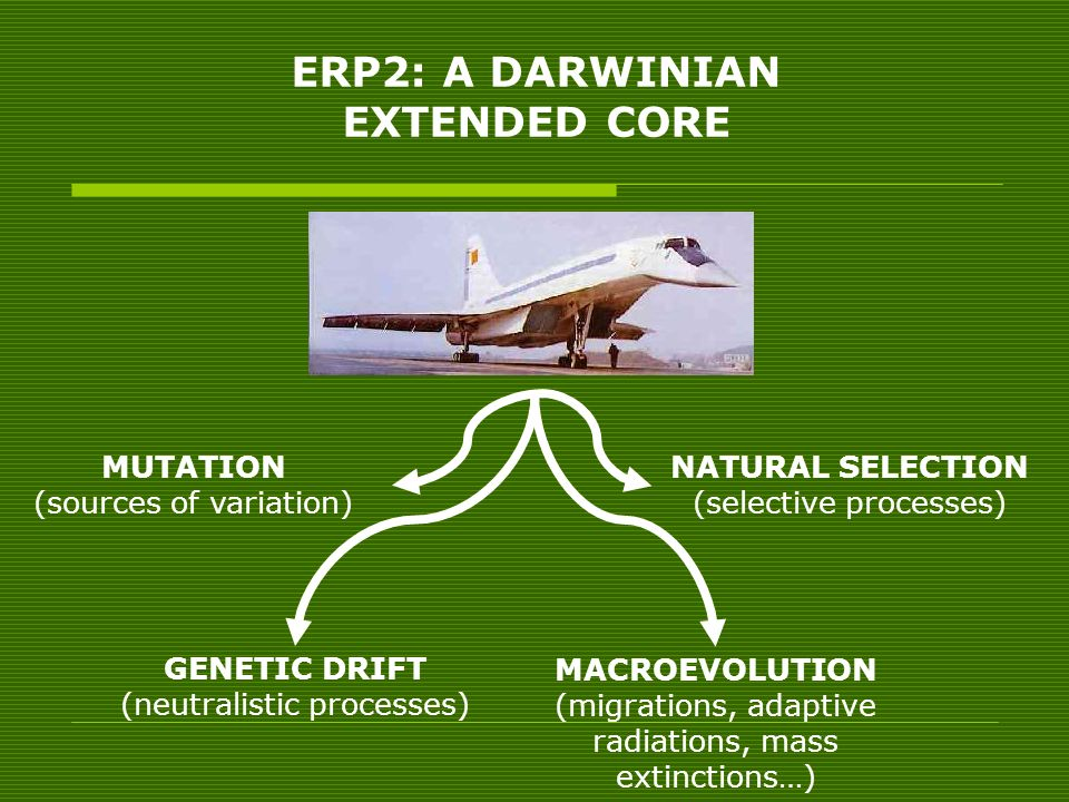 ERP2: A DARWINIAN EXTENDED CORE