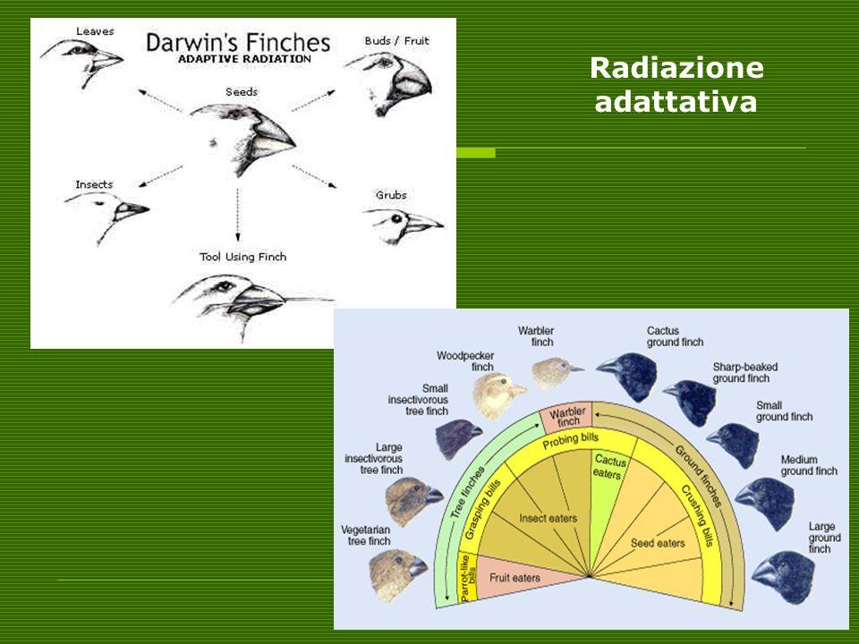 Radiazione adattativa