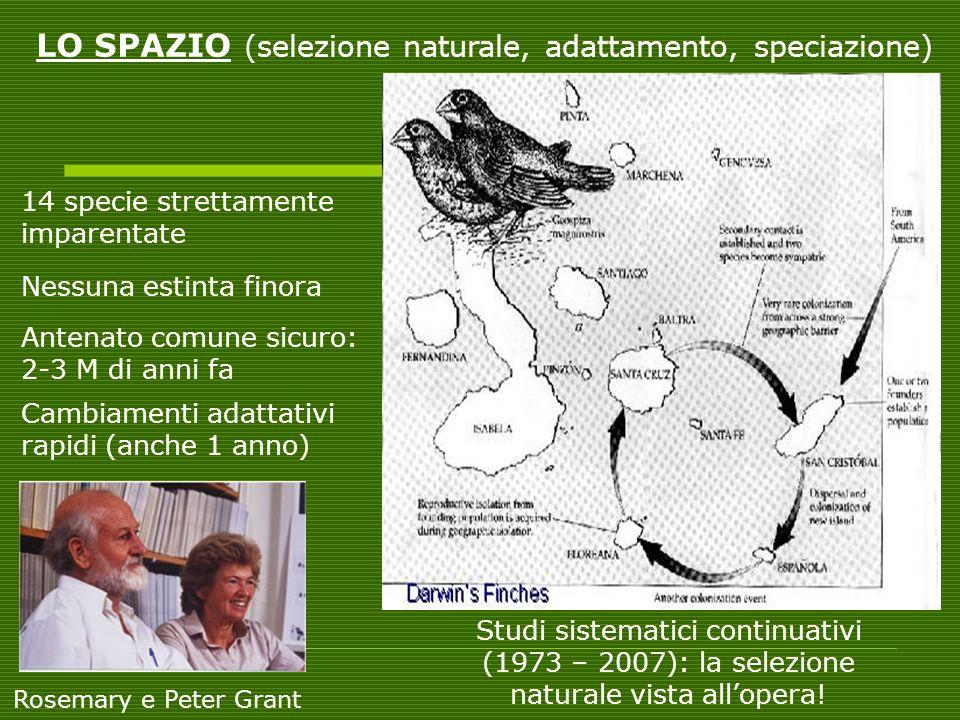 LO SPAZIO (selezione naturale, adattamento, speciazione)