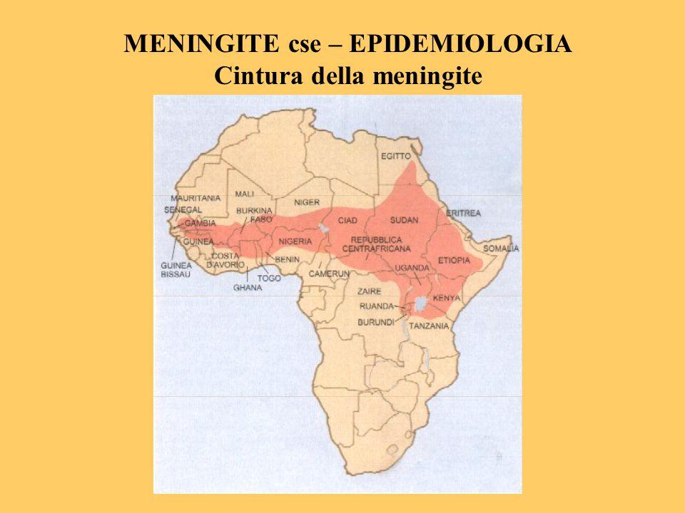 MENINGITE cse – EPIDEMIOLOGIA Cintura della meningite