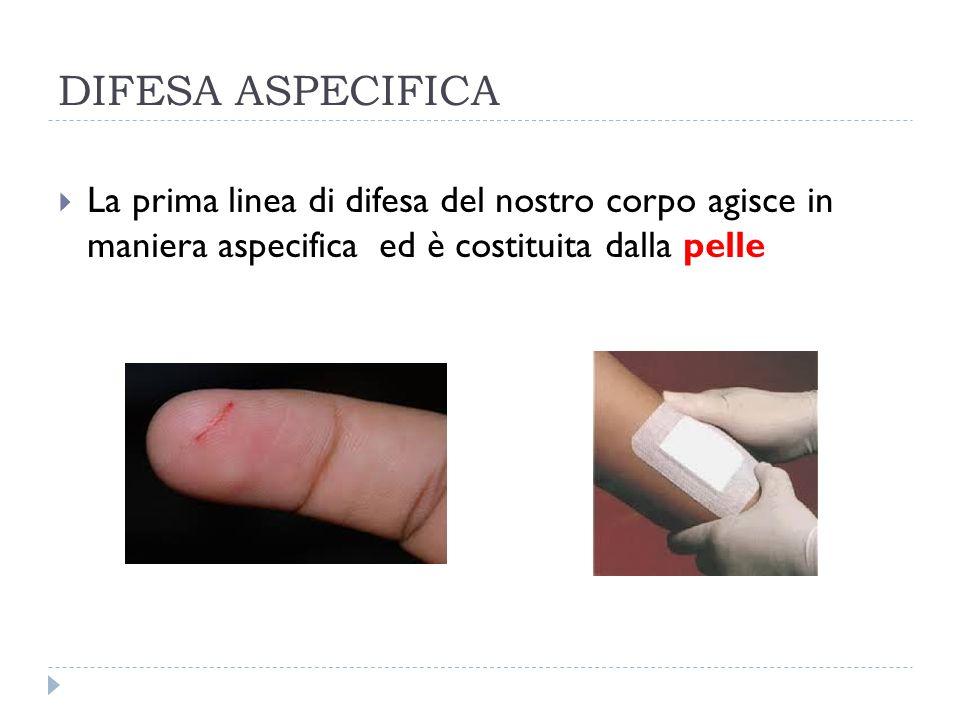 DIFESA ASPECIFICA La prima linea di difesa del nostro corpo agisce in maniera aspecifica ed è costituita dalla pelle.