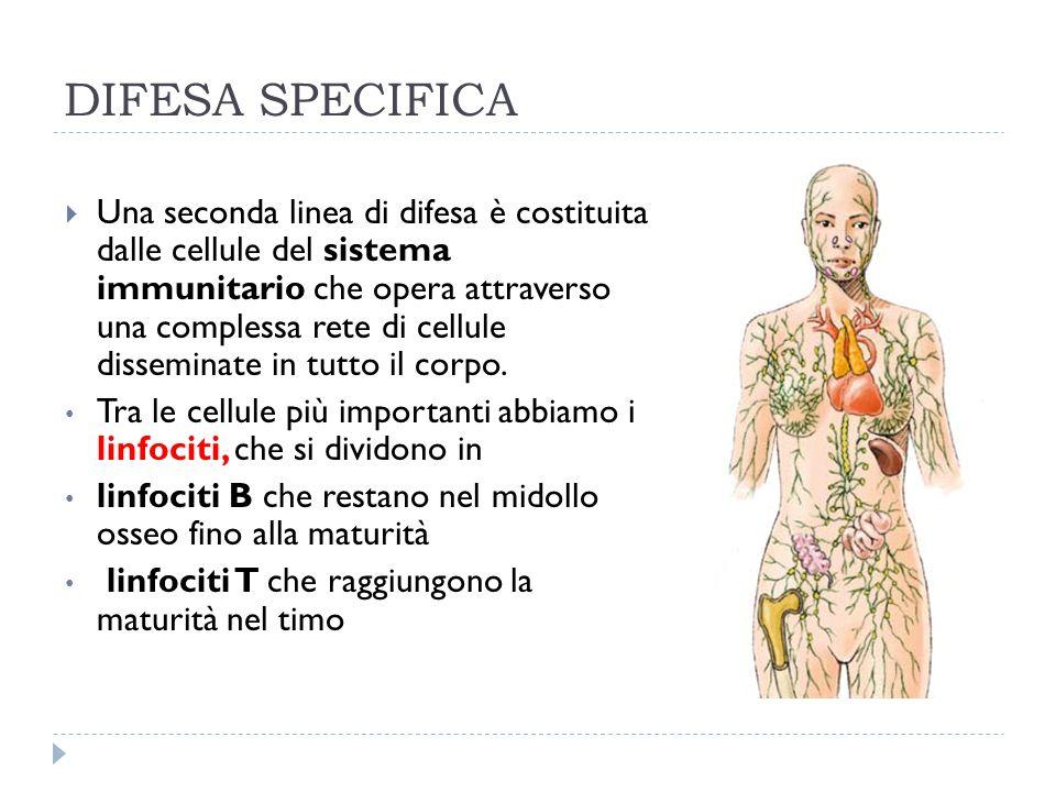 DIFESA SPECIFICA