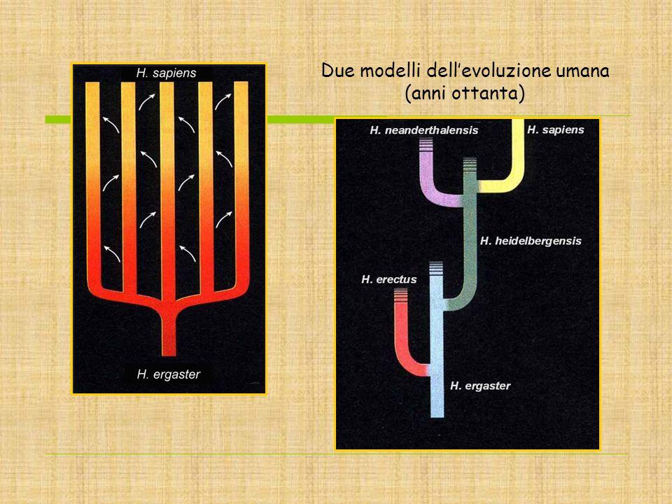 Due modelli dell'evoluzione umana (anni ottanta)