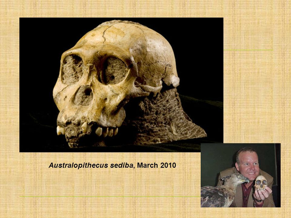 Australopithecus sediba, March 2010