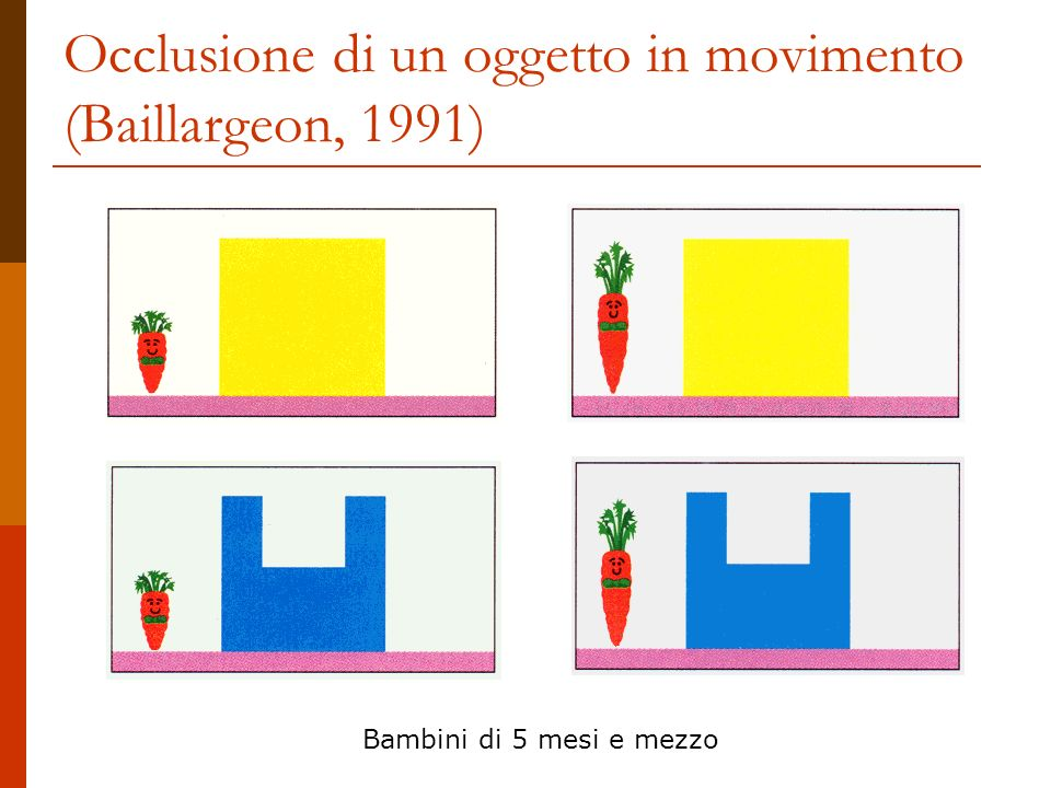 Occlusione di un oggetto in movimento (Baillargeon, 1991)