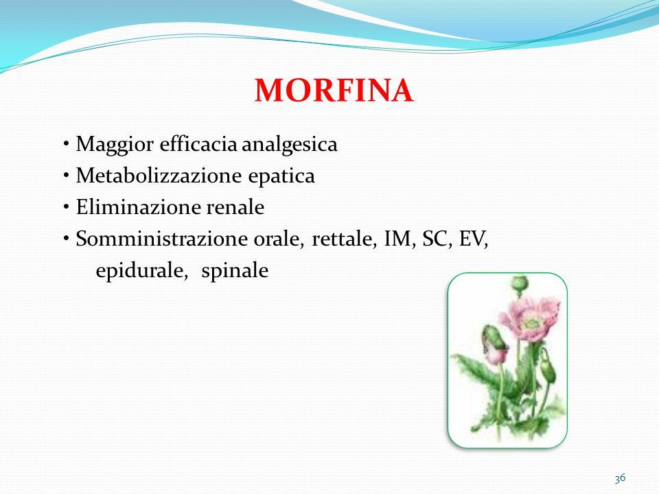 MORFINA Maggior efficacia analgesica Metabolizzazione epatica