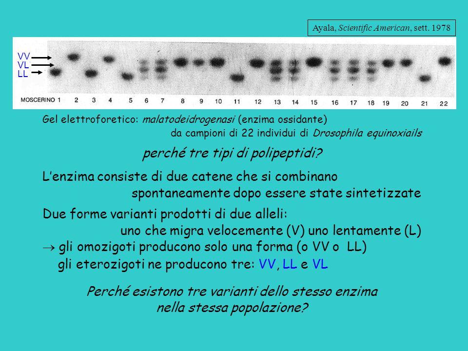 perché tre tipi di polipeptidi