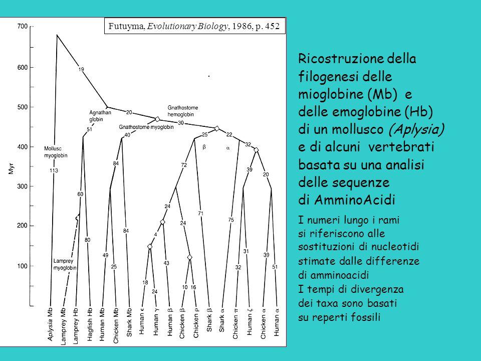 filogenesi delle mioglobine (Mb) e delle emoglobine (Hb)