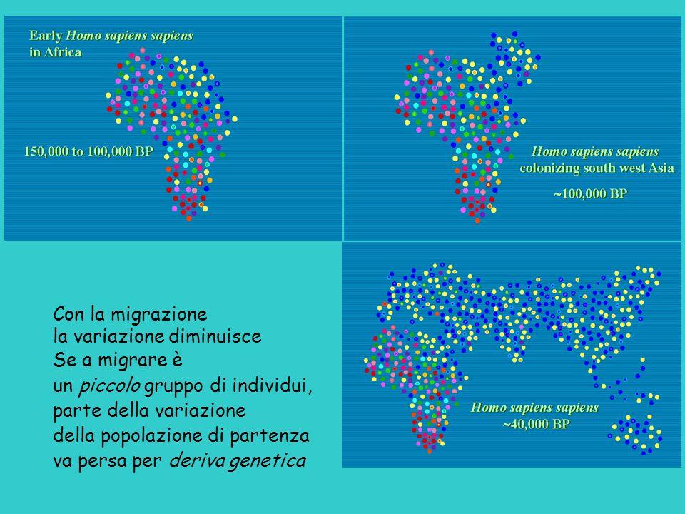 Con la migrazione la variazione diminuisce. Se a migrare è. un piccolo gruppo di individui, parte della variazione.