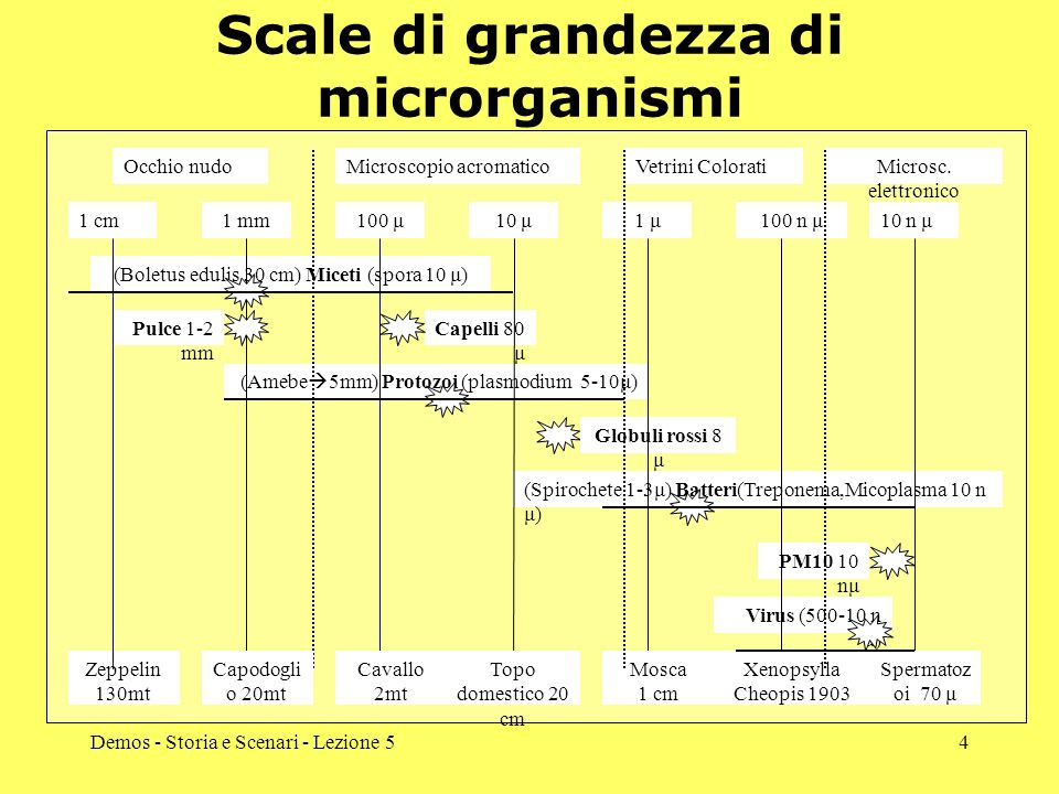 Scale di grandezza di microrganismi